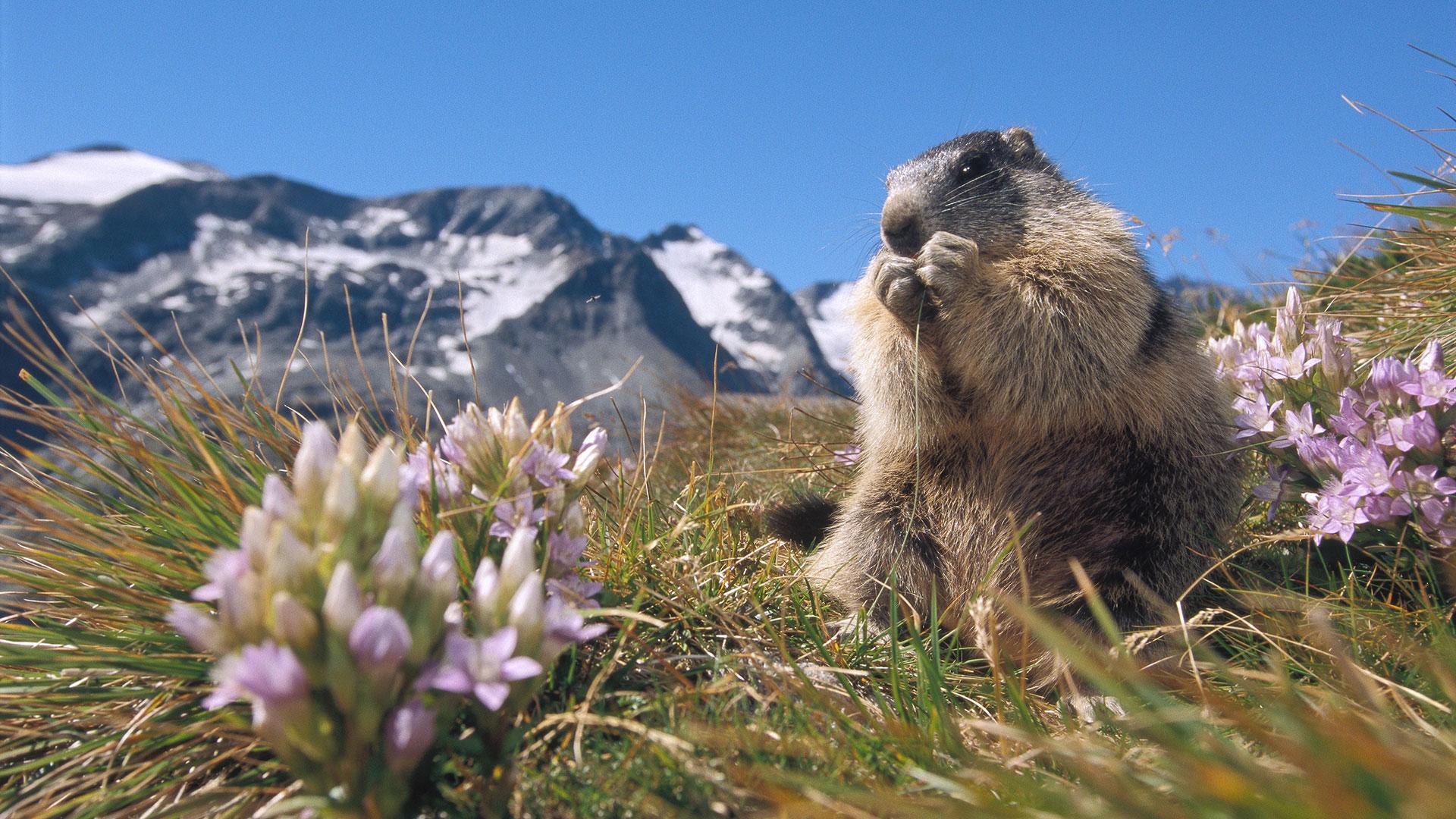 Envie de découvrir la faune et la flore - CGH Résidences